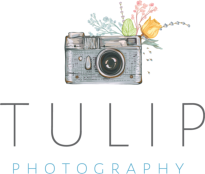 tulip photography